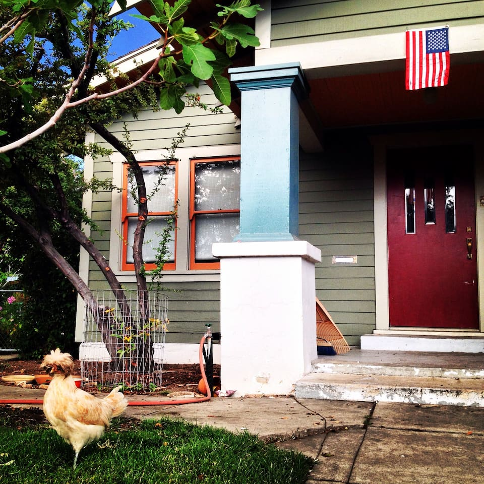 Phyllis the Chicken and the front door.
