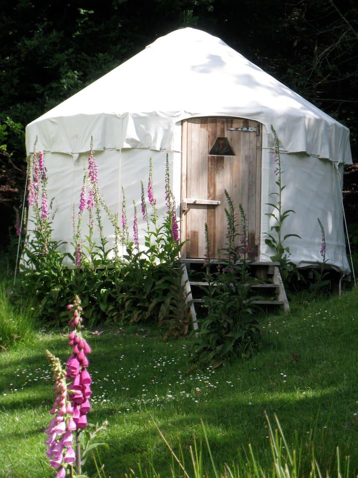 The foxglove yurt