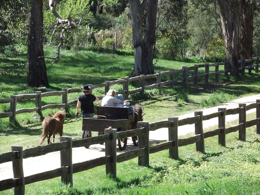Come along the driveway to the cottage by foot, car, or pony cart