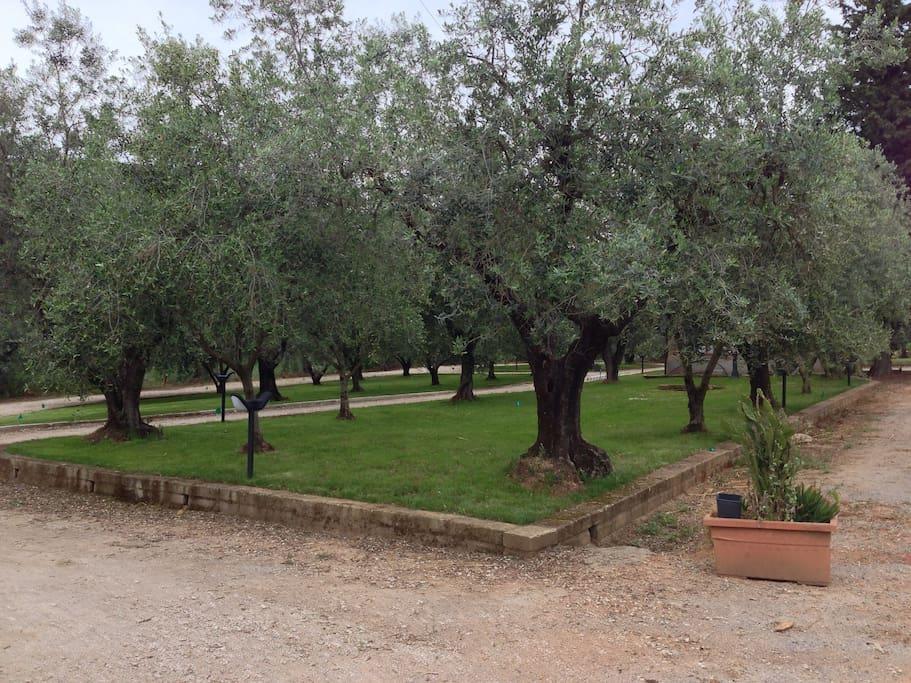 Giardini degli olivi