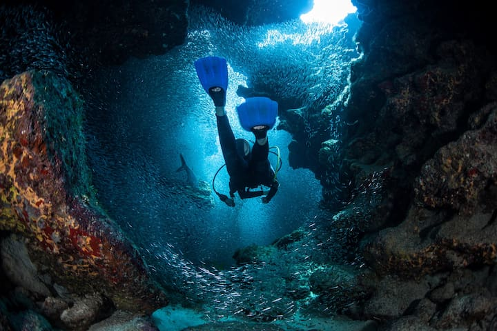 Dive to devilishly deep drop-offs , Snorkel close to the coolest corals around Barrier Reef