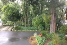 Garden setting.