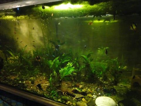 400 litres aquarium