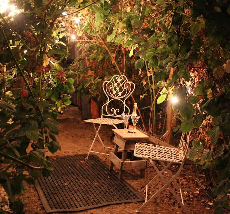 Backyard under the lighted arbor.