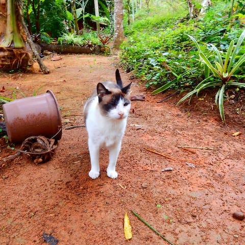 Chalé na Mata a 100m da praia - Ilha Grande - Angra dos Reis - Chalet