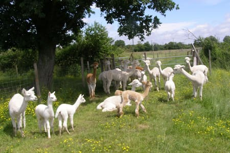 Relax on holiday with Alpacas - Le Breuil-sous-Argenton