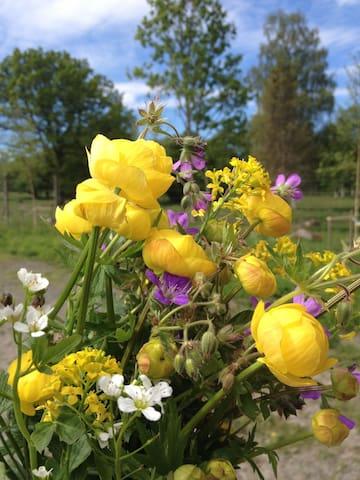 Wild flowerpicking
