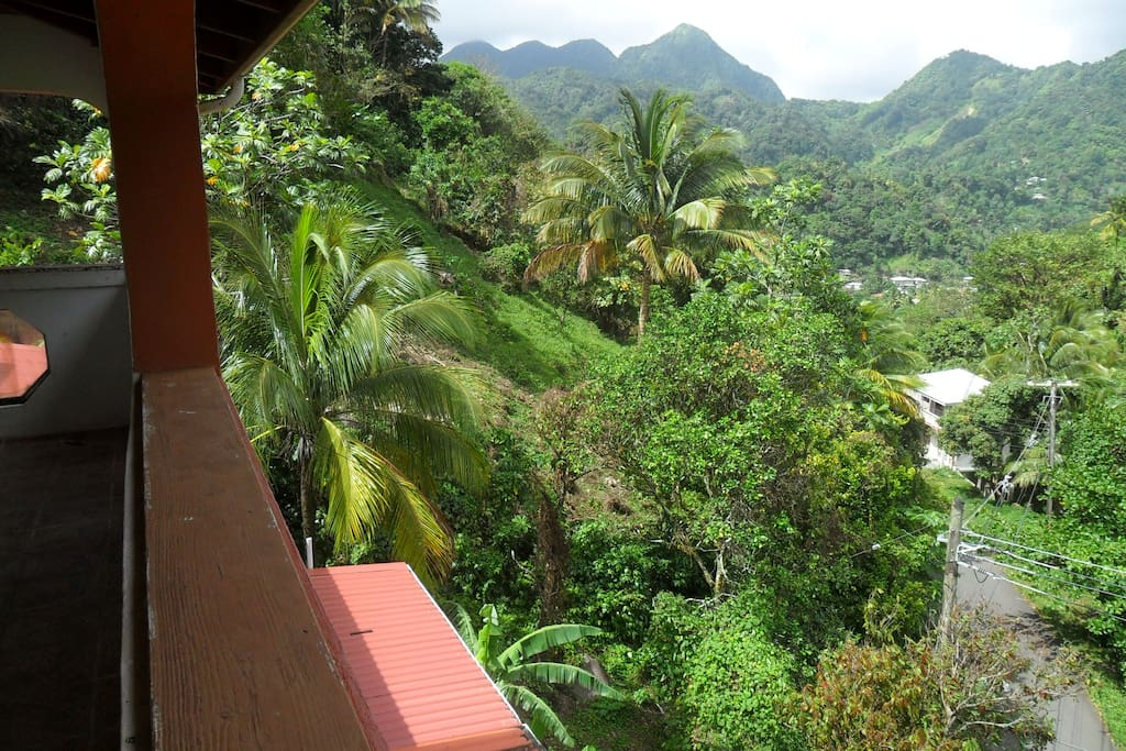 Rainforest view from balcony