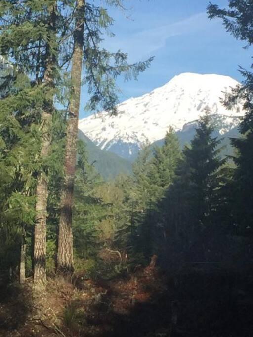 Deer X-ing's view of Mt. Rainier