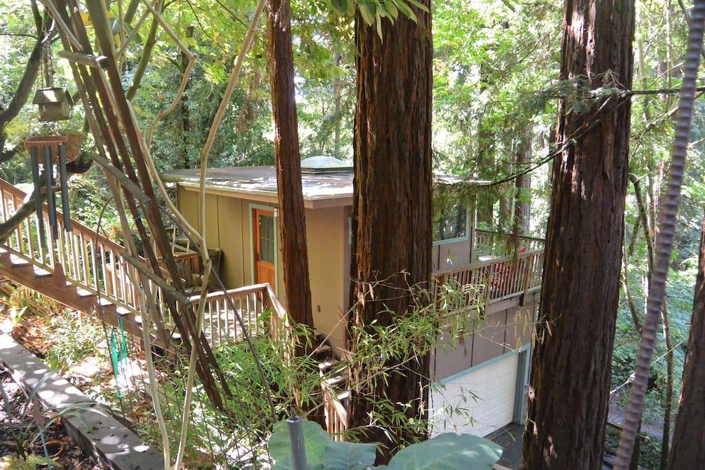 Treehouse-like Redwood Studio in Aptos