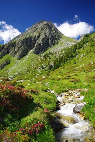 Le vallon de l'Orgère où l'on peut voir les marmottes...