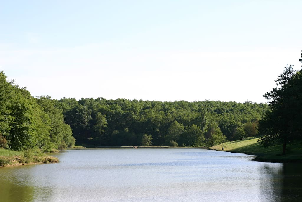 L'étang et la forêt