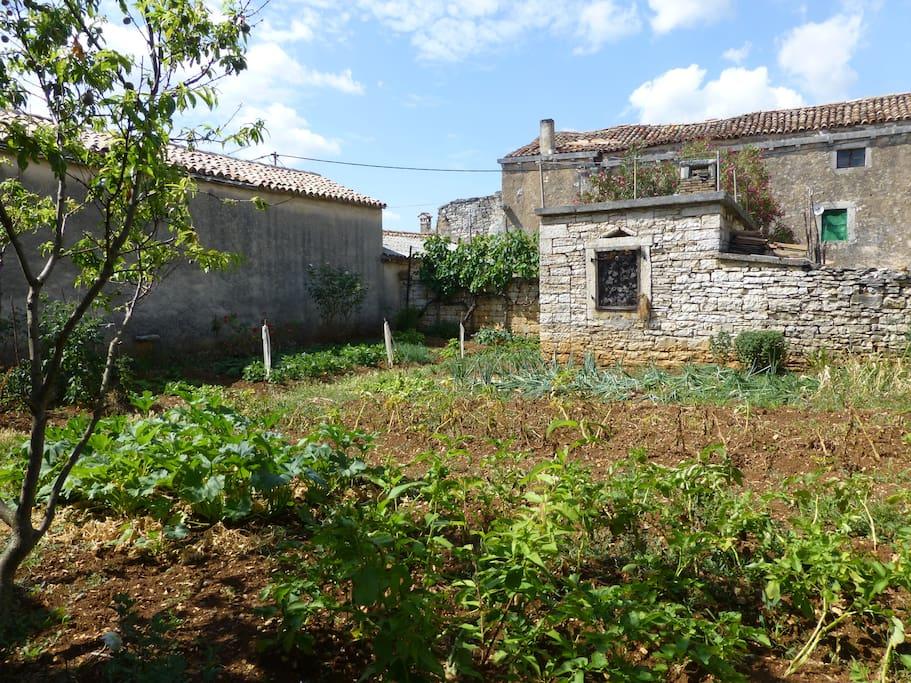 Additional vegetable garden