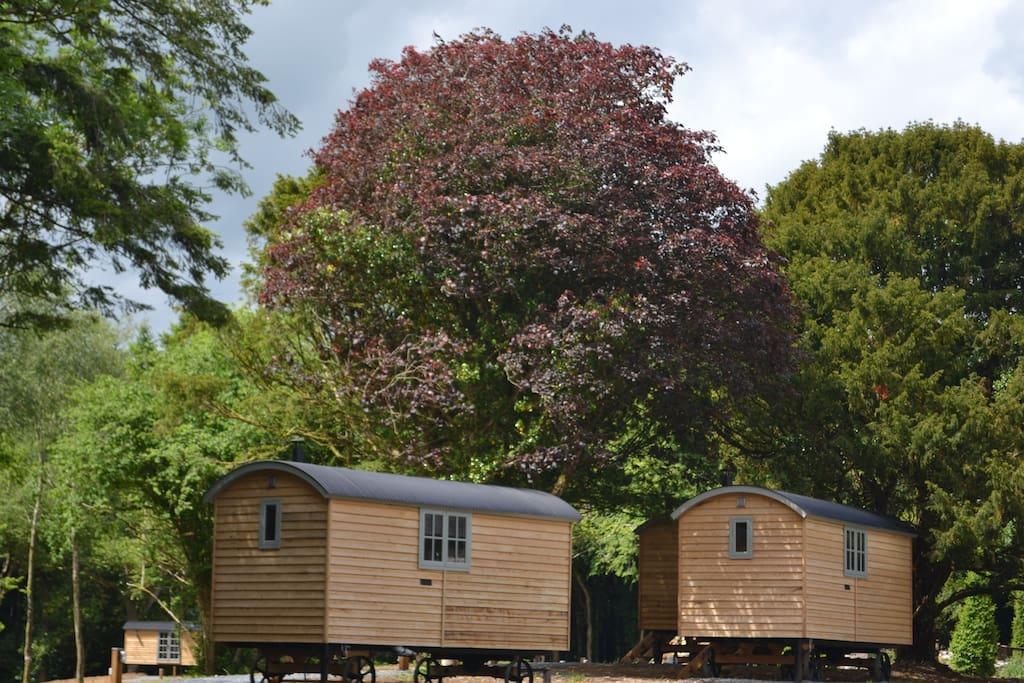 Shepherd huts village set in the woodlands
