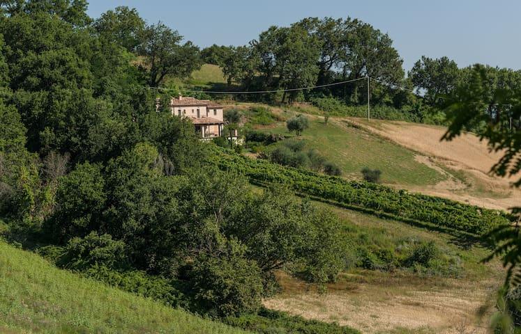 Agriturismo Bacchiocchi, rooms - Orciano, Montebello di Orciano - House
