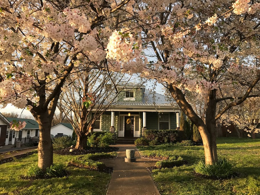 Spring in Nashville is beautiful!
