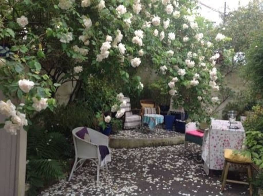Courtyard garden, tranquil & relaxing