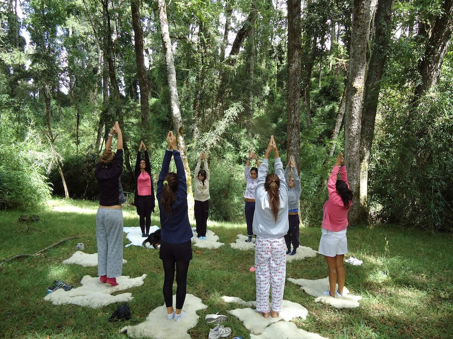 your forest yoga session, bet way to start your day