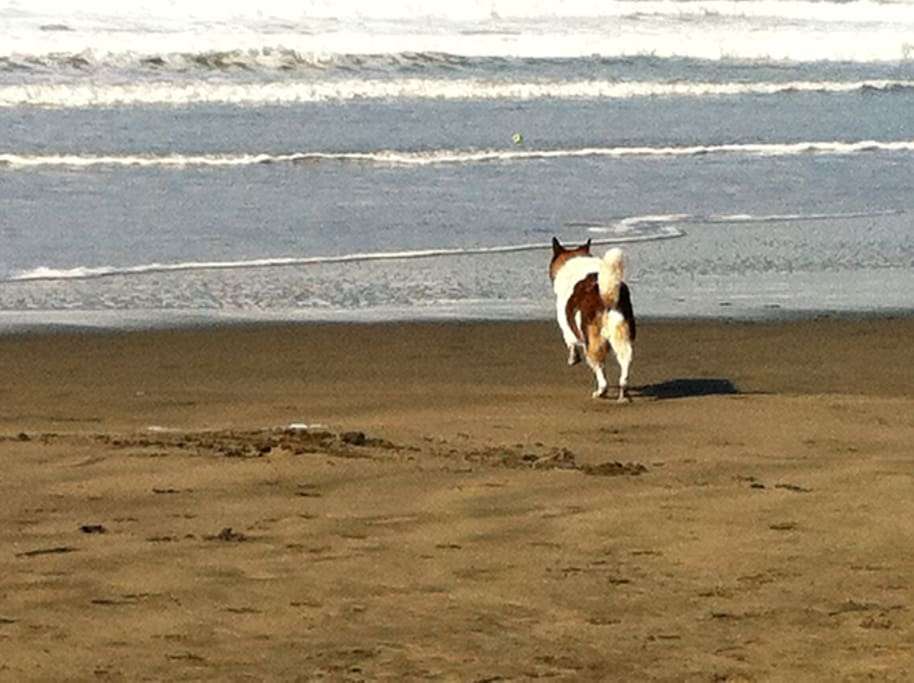The bus outside our door will take you right to Ocean Beach. One of our dog's favorite places! He's always up for a walk.