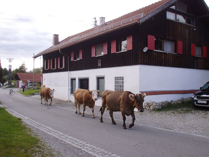 Idyllic homestead - Kässtübli