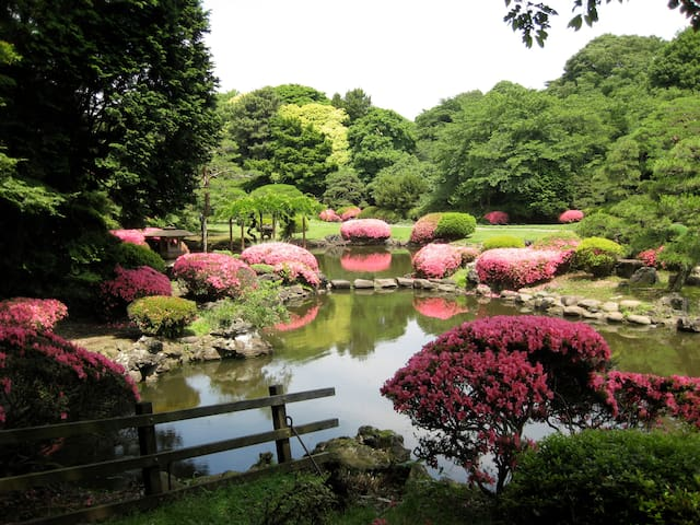 You can enjoy unique Japanese nature  thorough all seasons