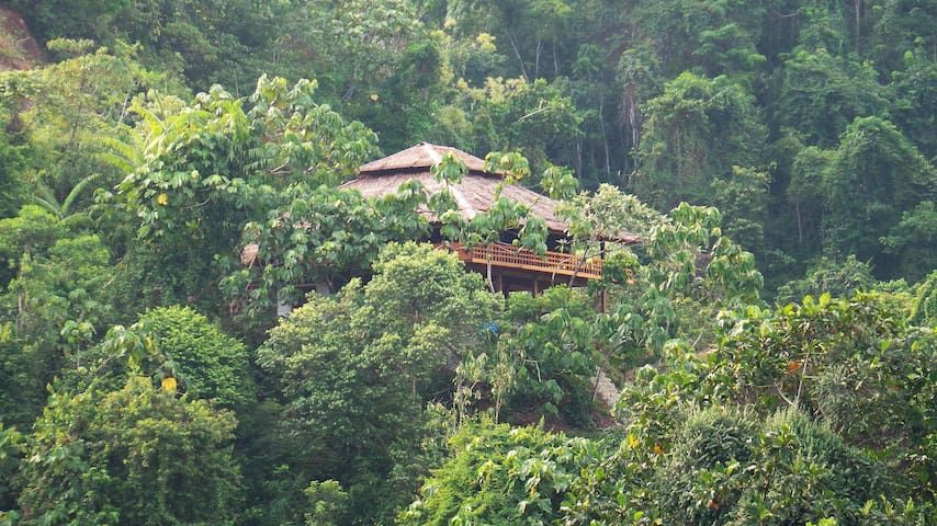 Bukit Lawang Hill Resort