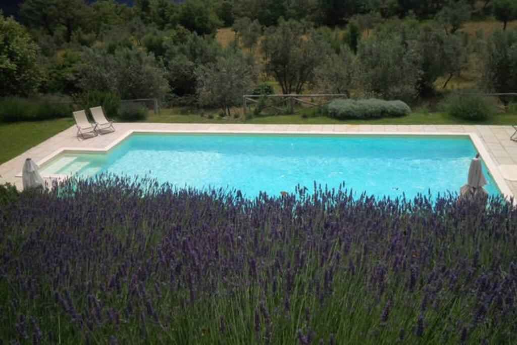 swimming pool with lavender bloom