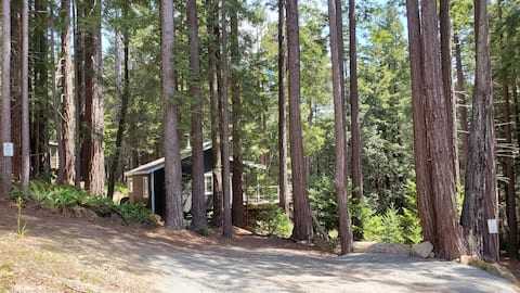 Modern cabin within gorgeous redwoods of P.A.