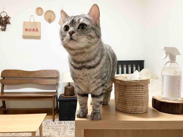 [여성 전용] 역삼역에서 귀여운 고양이와 하루를!