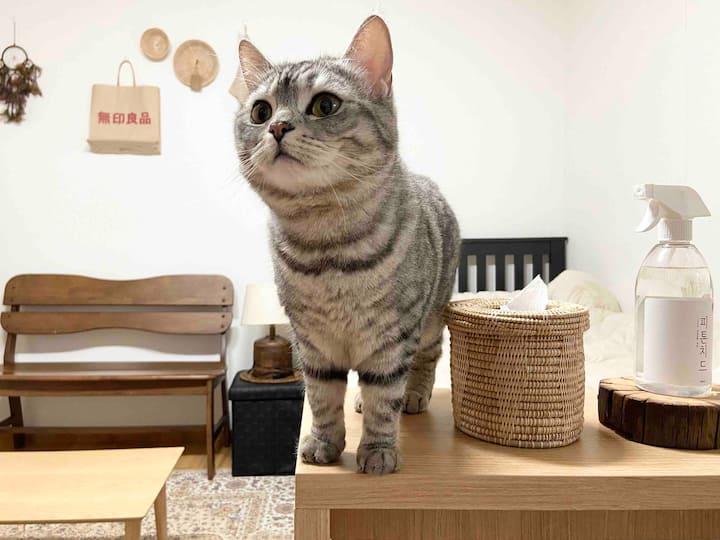 [여성 전용] 역삼역 고양이 두마리 #삼동이삼순이네