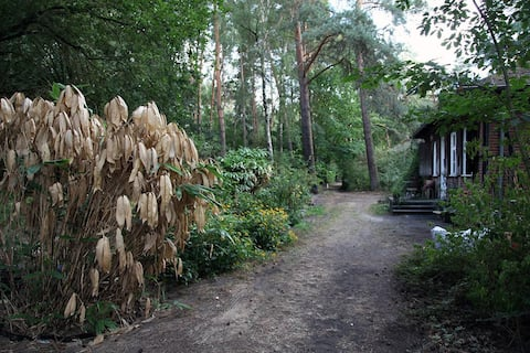 Mitten im Wald - Künstlerdomizil im Norden Berlins