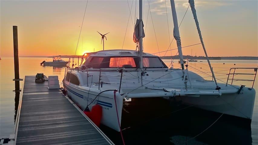 39 ft Catamaran, Portland Dockside view. - Portland - Bateau