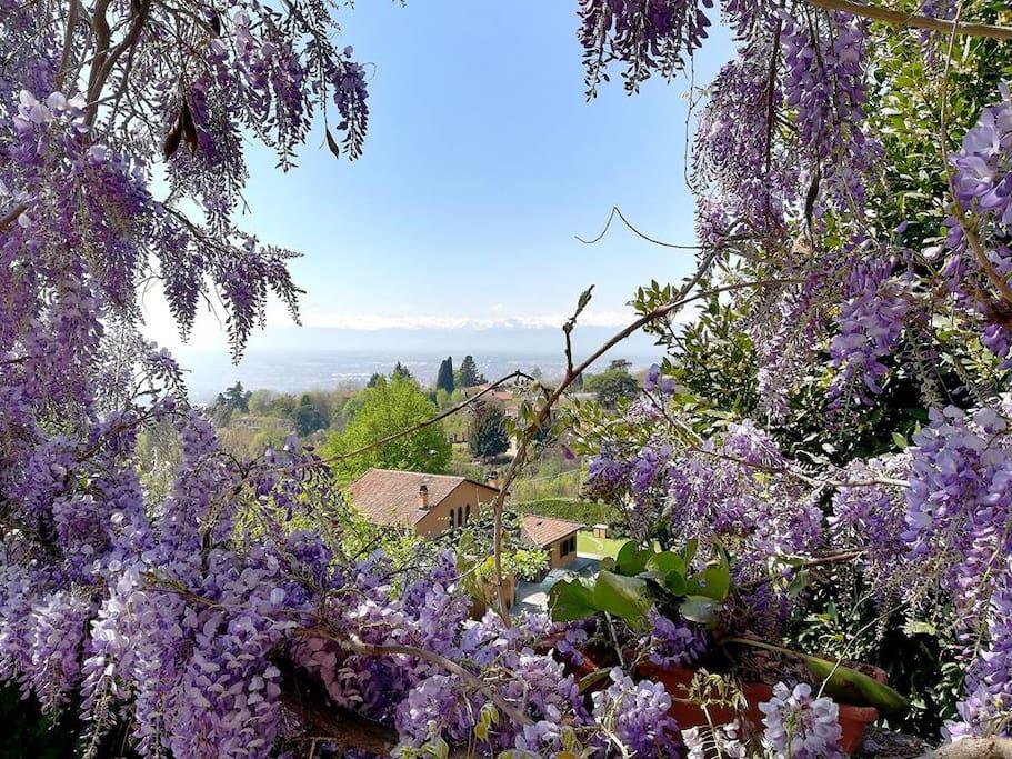 Veduta su Moncalieri dal giardino