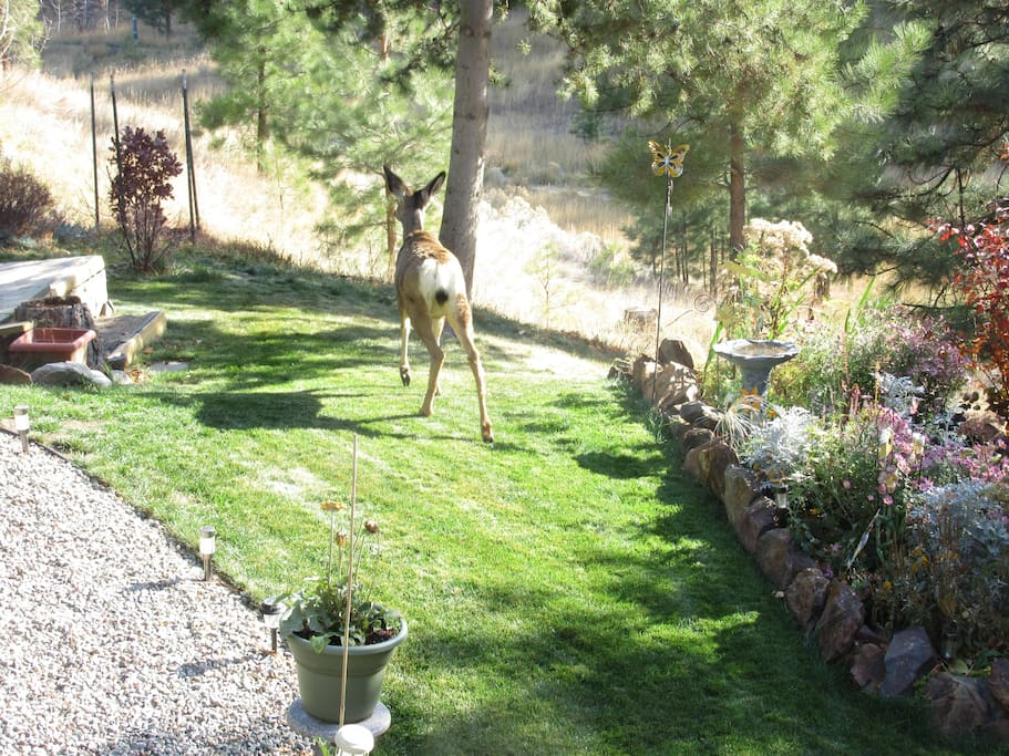 Deer come and go so quickly....fun to  see them in yard.