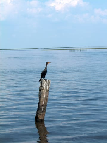 Waterfront/Lake Okeechobee access - Okeechobee - Casa