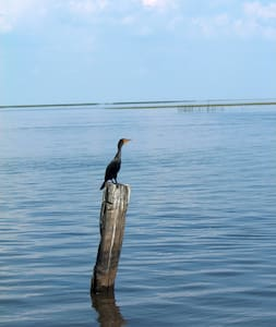 Waterfront/Lake Okeechobee access  - Okeechobee - Maison