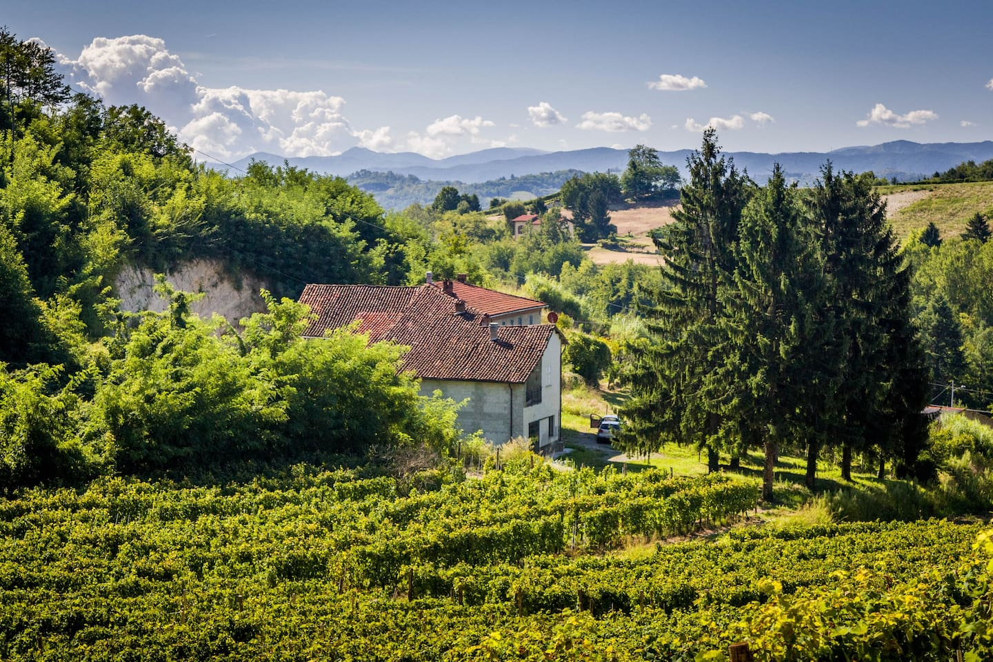 View of the house from our wineyard