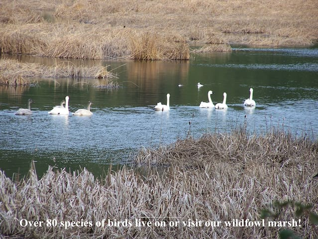 The Frank Richardson Wildfowl Preserve with over 80 species of birds documented is on our property, a short walk away.
