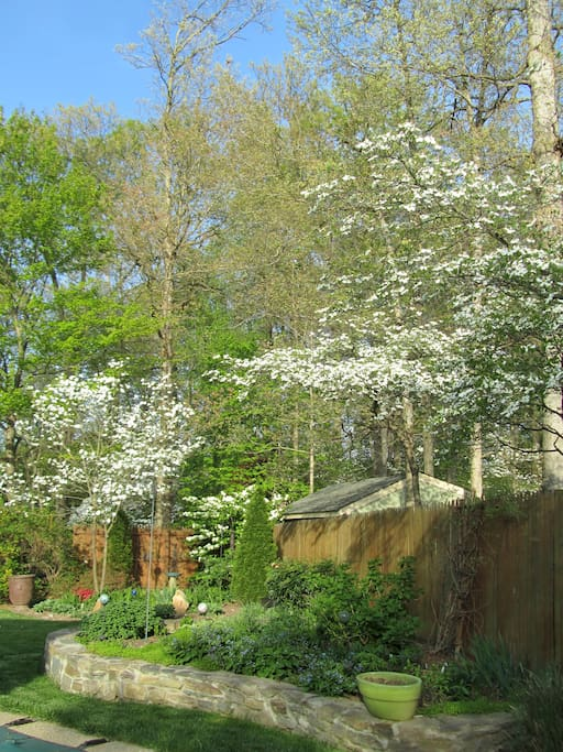 Welcoming spring with surrounding dogwood trees in backyard.
