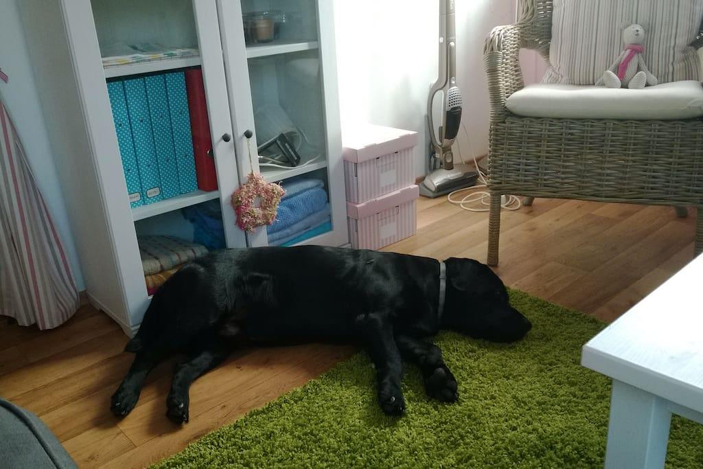 Labrador Samuel je hravý a bezpečný