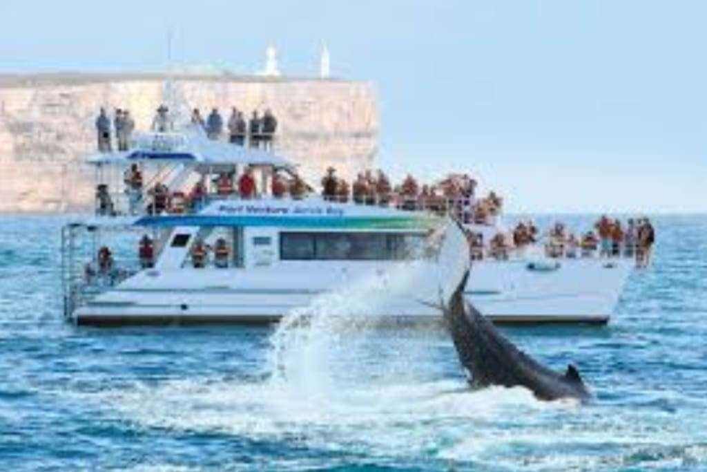 Whale & Dolphin Watching only a few minutes away!!