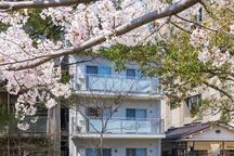 New!【Alphabed広島平和大通り#201】中心街のリバーサイド(38㎡) 比治山下駅6分
