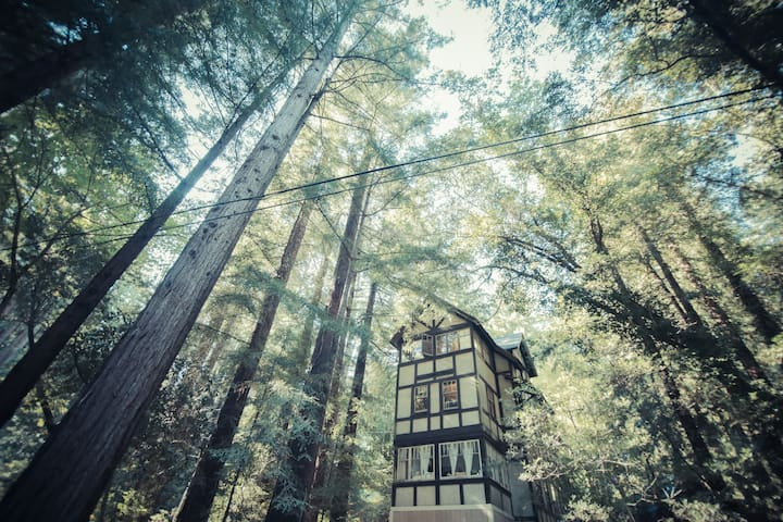 Cozy 1-BD Redwood Treehouse Retreat - Mill Valley - Dom
