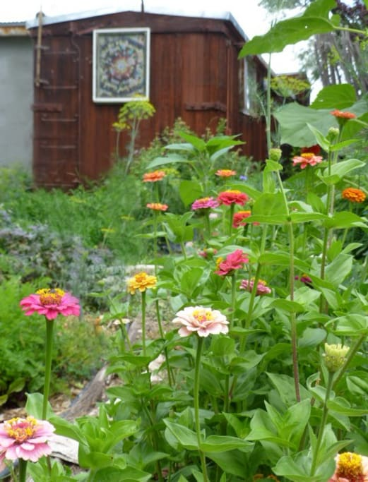 Summer view of the boxcar enjoyed from the organic vegetable garden.