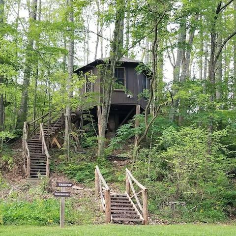 Tree Top Cabin at Healing Springs