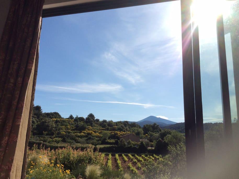 Morning sun from the Studio window.