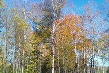 It's beautiful here in the Fall.