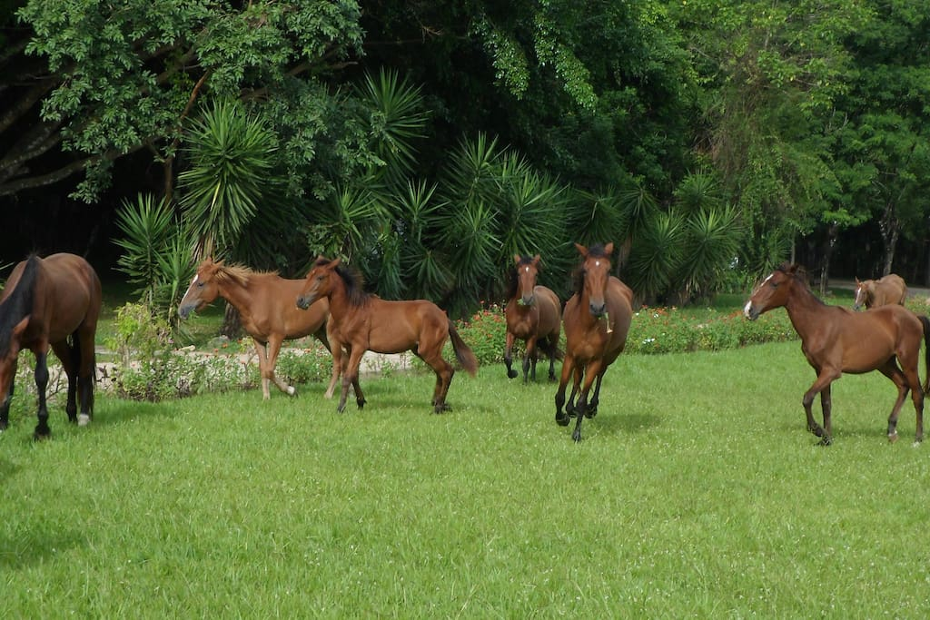 Our horses are available for guided, reasonably priced tours.