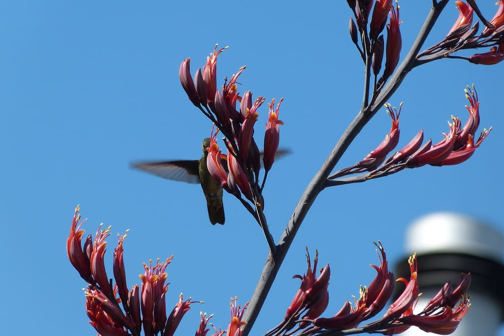 Un colibrí en el jardín de Mi Mar