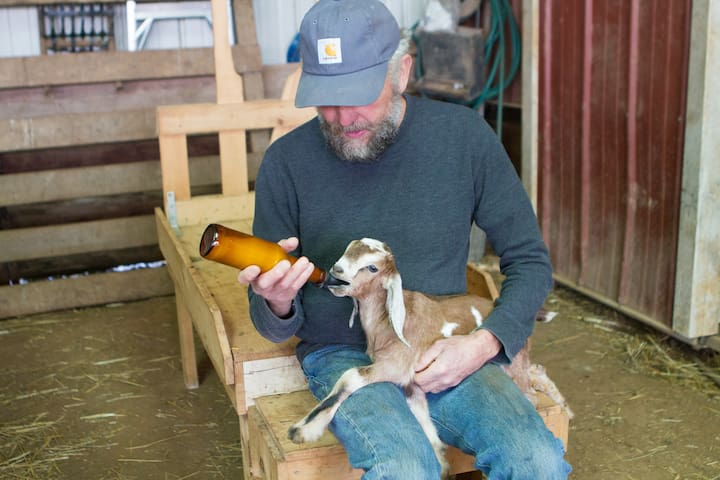 Kidding generally occurs in late March and April. Sometimes we have a baby who Whitt has to bottle feed. The little buck, Dewey, was re-homed to a local artisan.